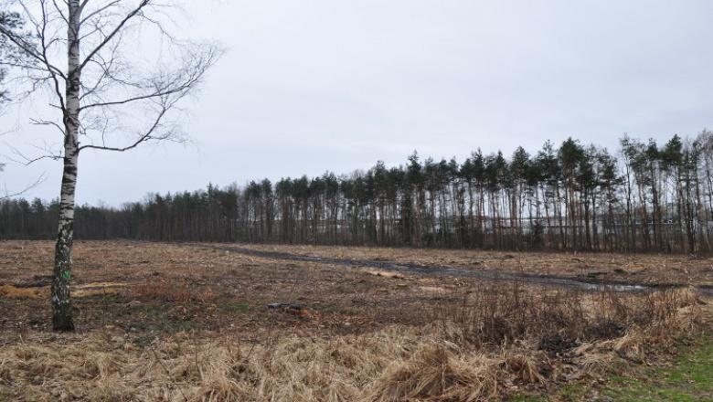 Teren budowy cmentarza przy ul. Radomskiej